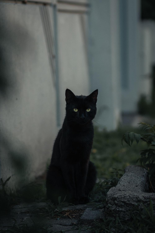black cat on gray concrete wall