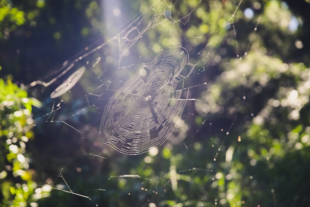 spider web on green plant during daytime