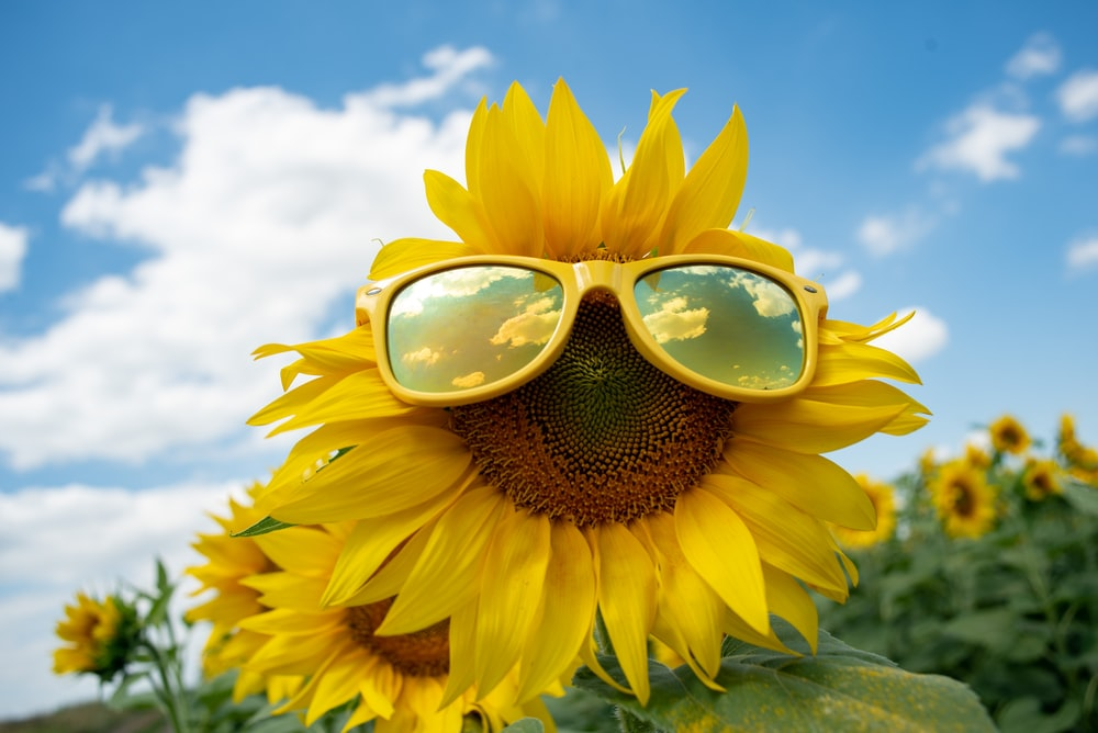 sunflower with sunglasses under blue sky during daytime