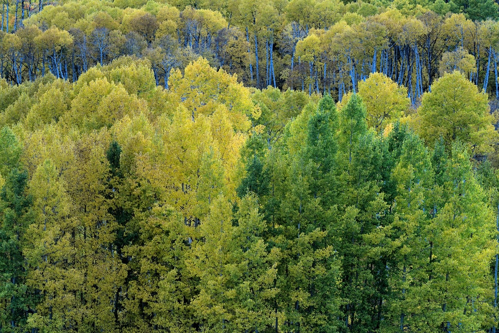 green and yellow trees during daytime