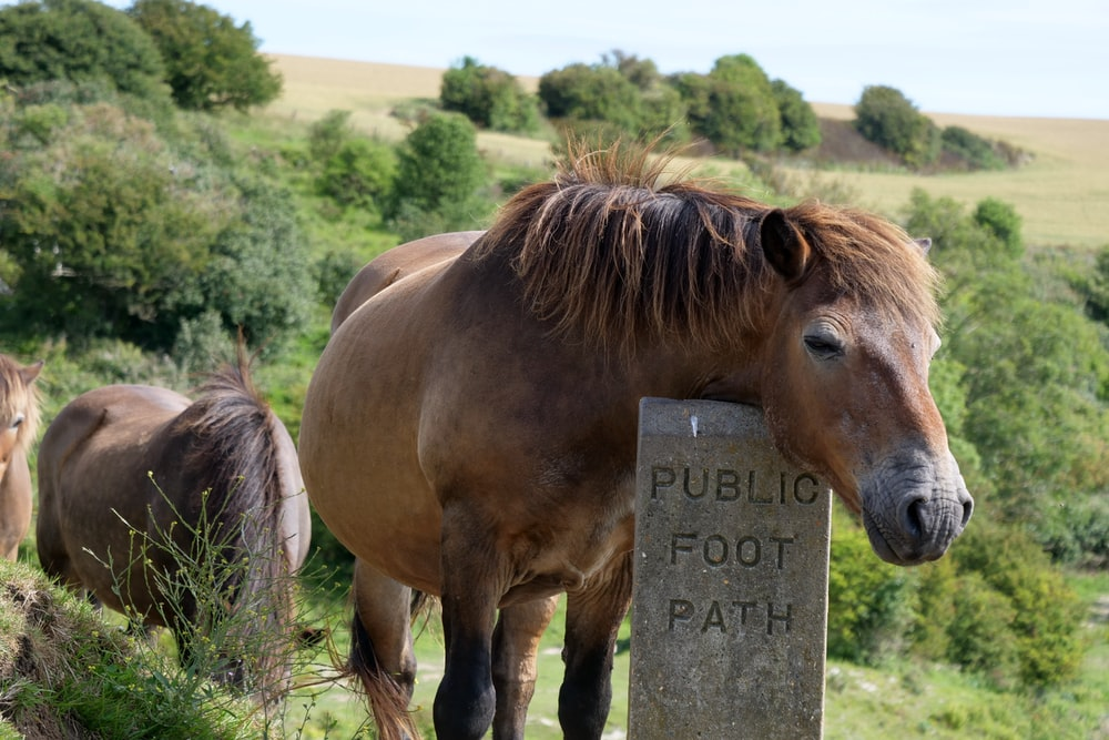 brown horse standing on green grass field during daytime