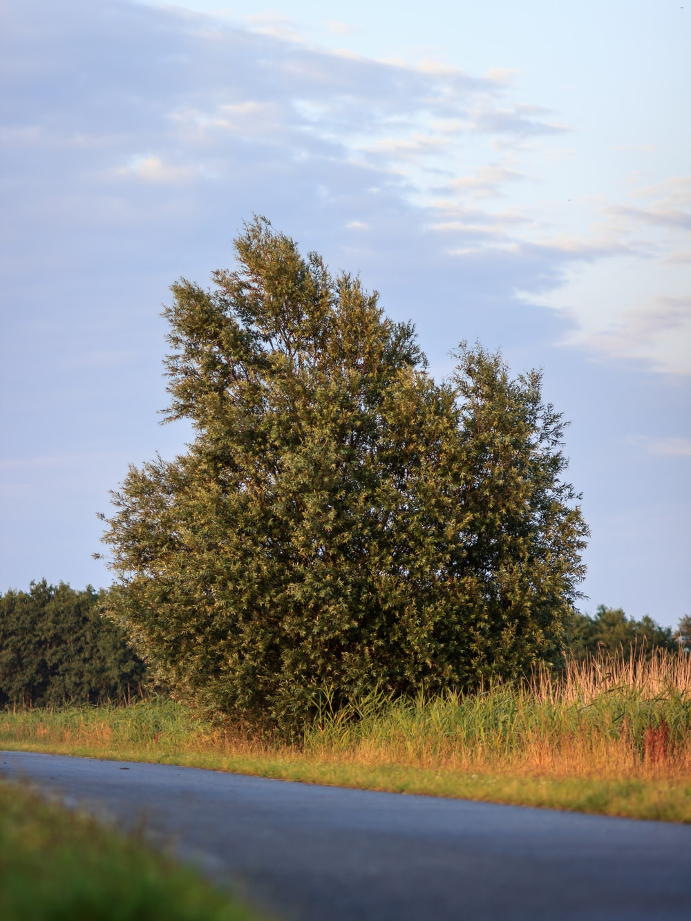 green tree beside gray road during daytime
