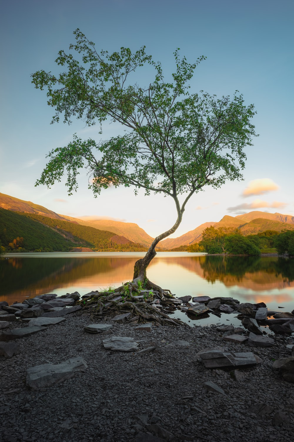 green tree near lake during daytime