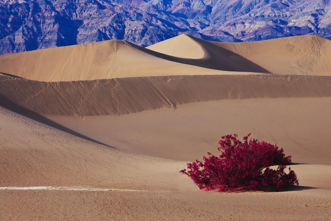 Dunes Magic In Death Valley - unsplash