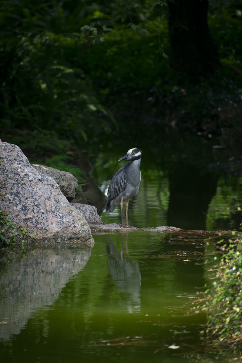 grey and white bird on grey rock near body of water during daytime