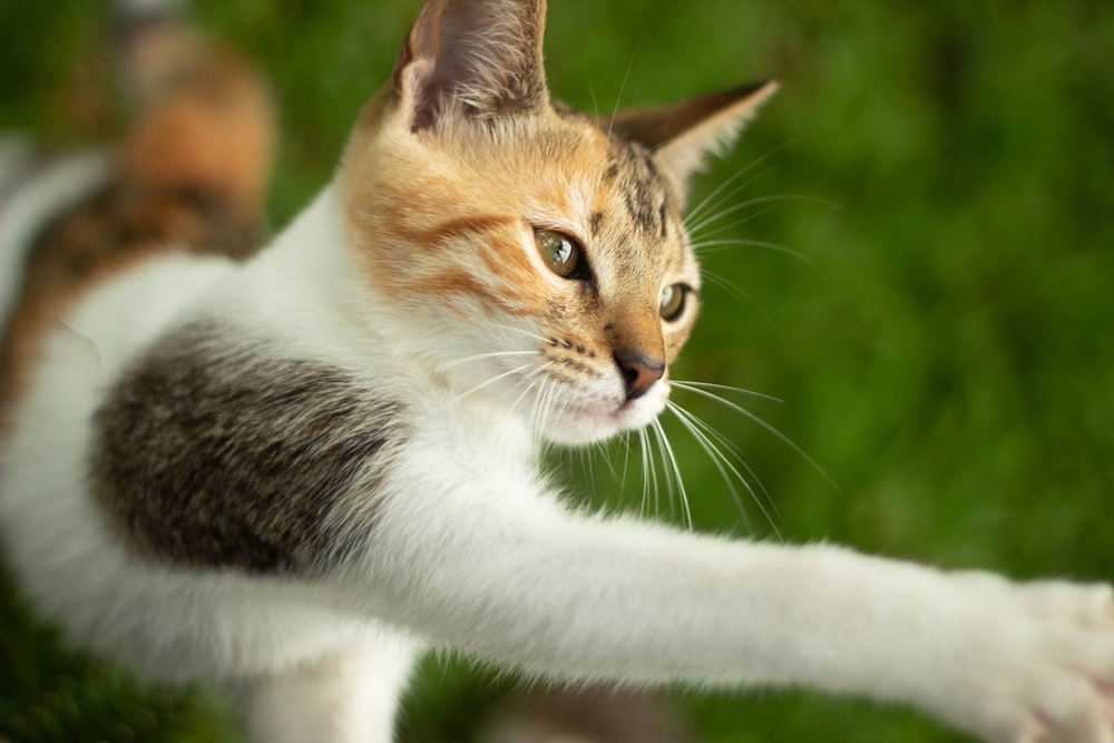 orange and white cat on green grass during daytime