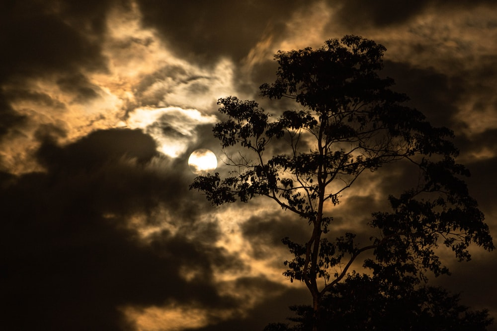 silhouette of tree under cloudy sky