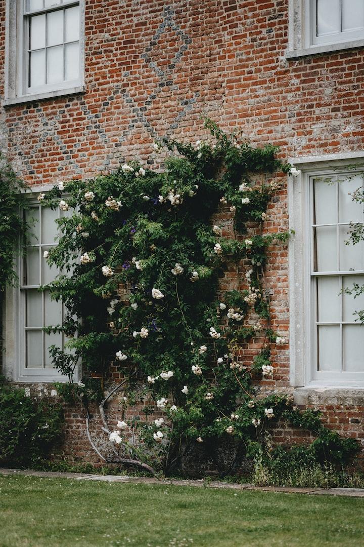 The Flowers of Langdale Lane