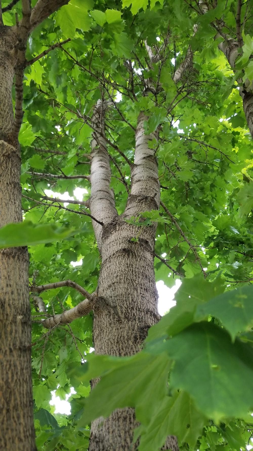 green leaves on brown tree