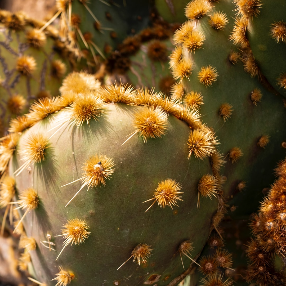 A close up of a cactus
