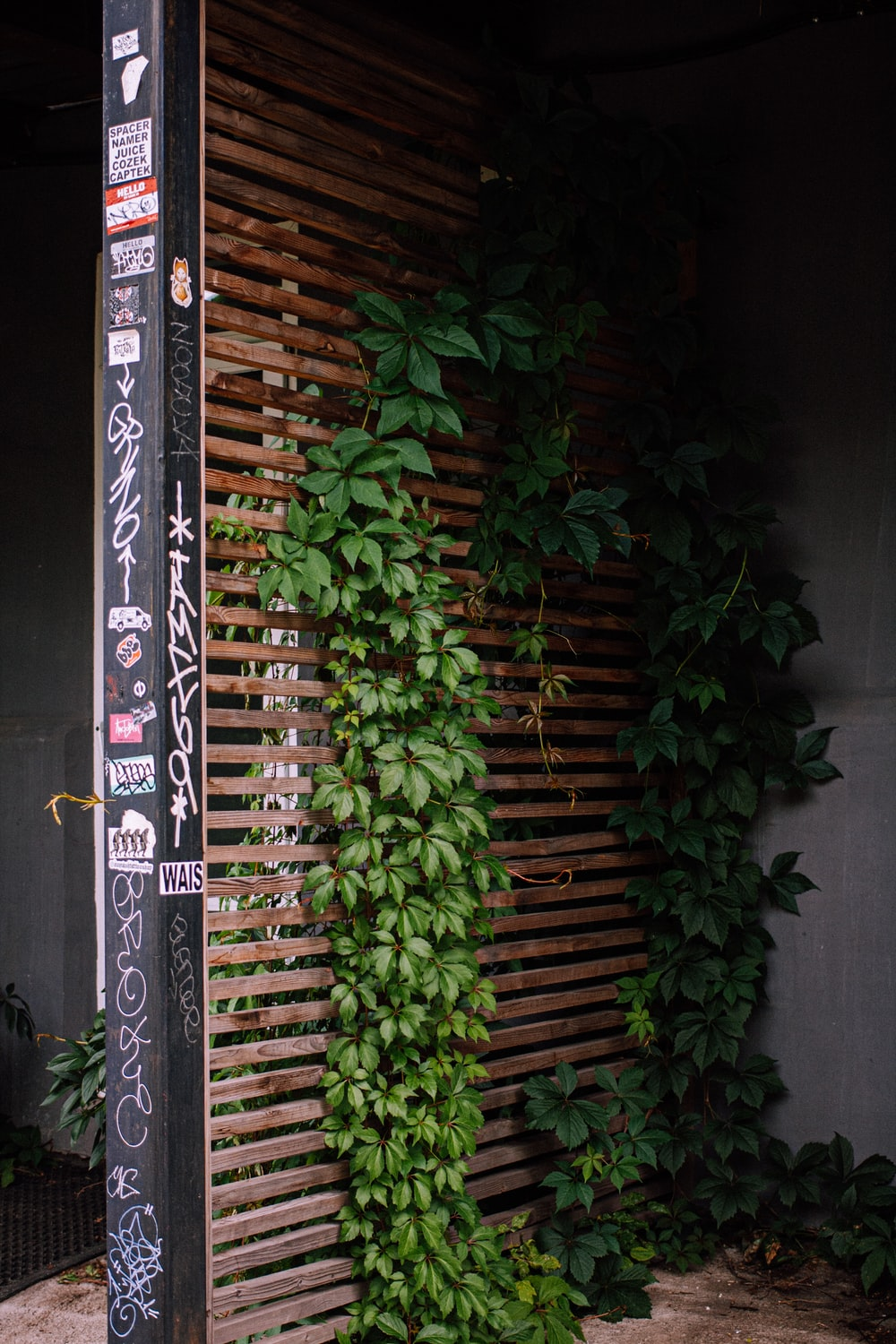 green plant on black wooden fence