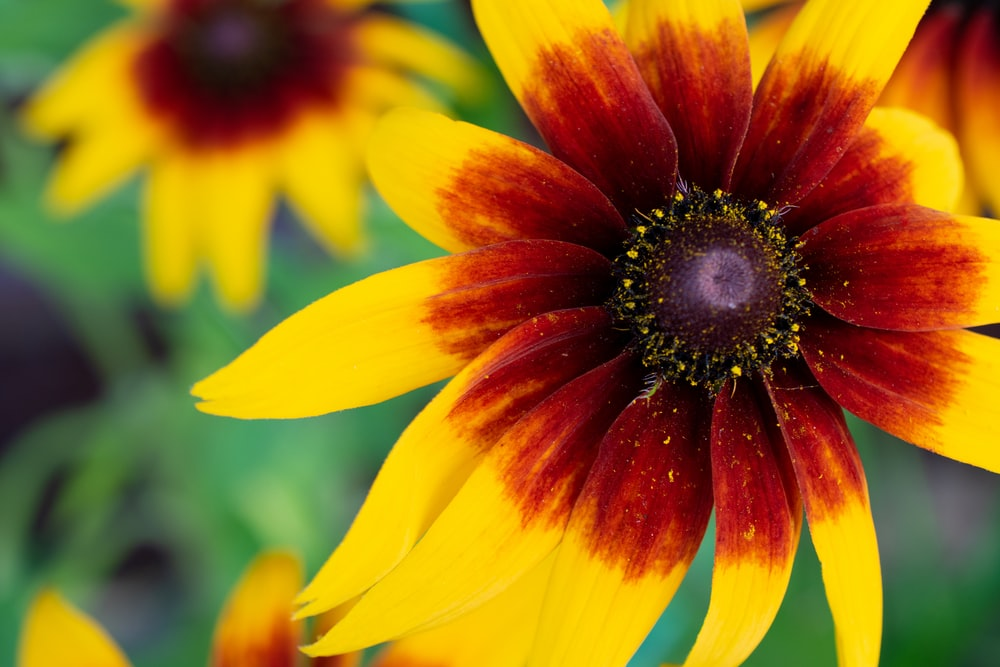 yellow and red flower in bloom