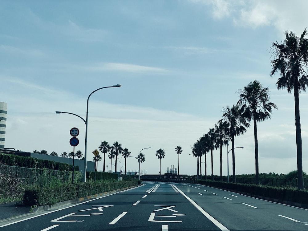 black asphalt road between palm trees during daytime