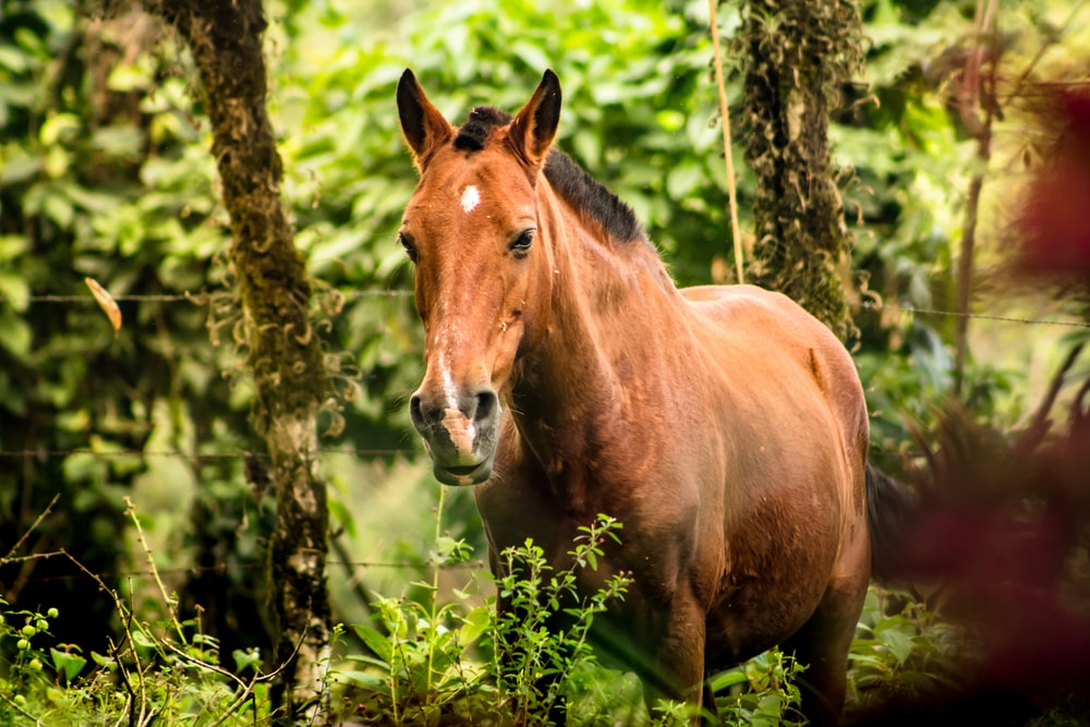 brown horse standing on green grass during daytime