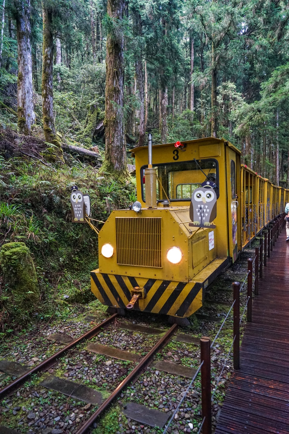 yellow train in the middle of the forest