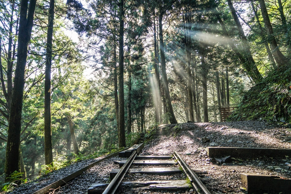 brown wooden train rail surrounded by green trees during daytime