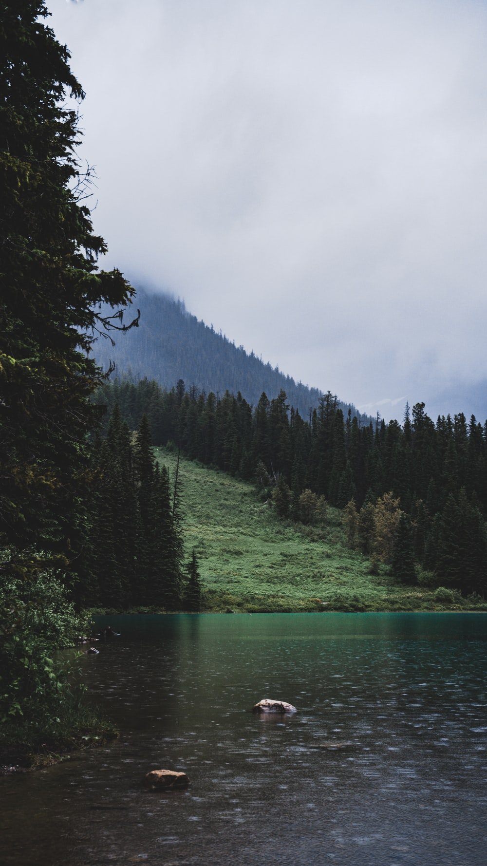green pine trees beside river under cloudy sky during daytime