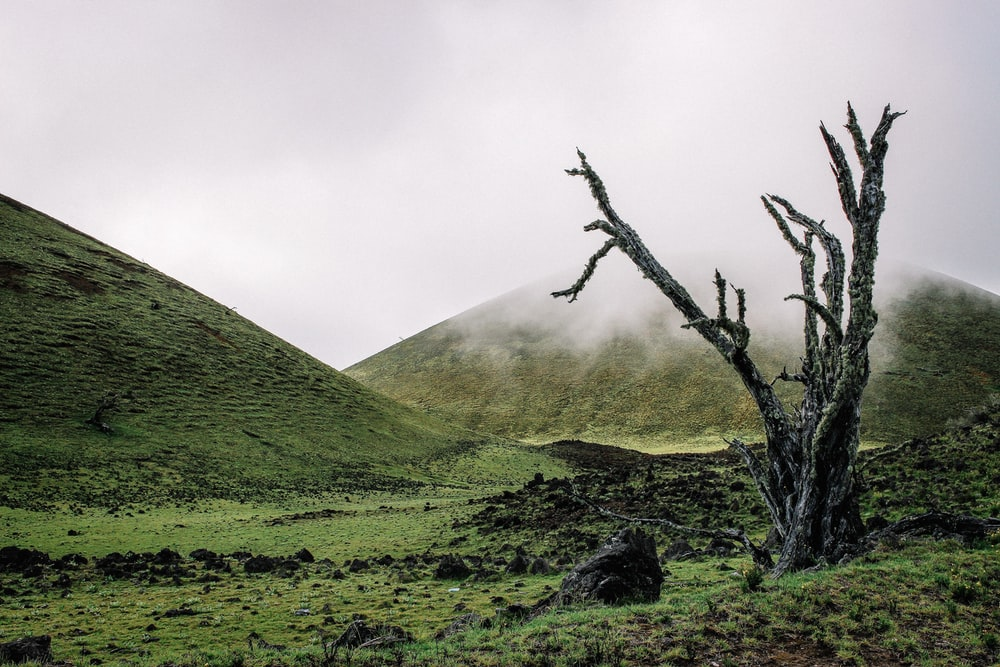 leafless tree on green grass field near mountain during daytime