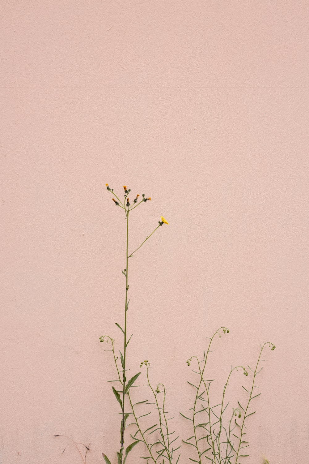 yellow flower on brown wall