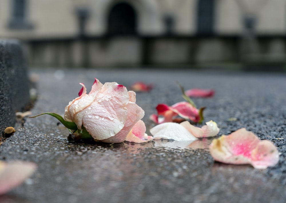 pink and white petals on ground