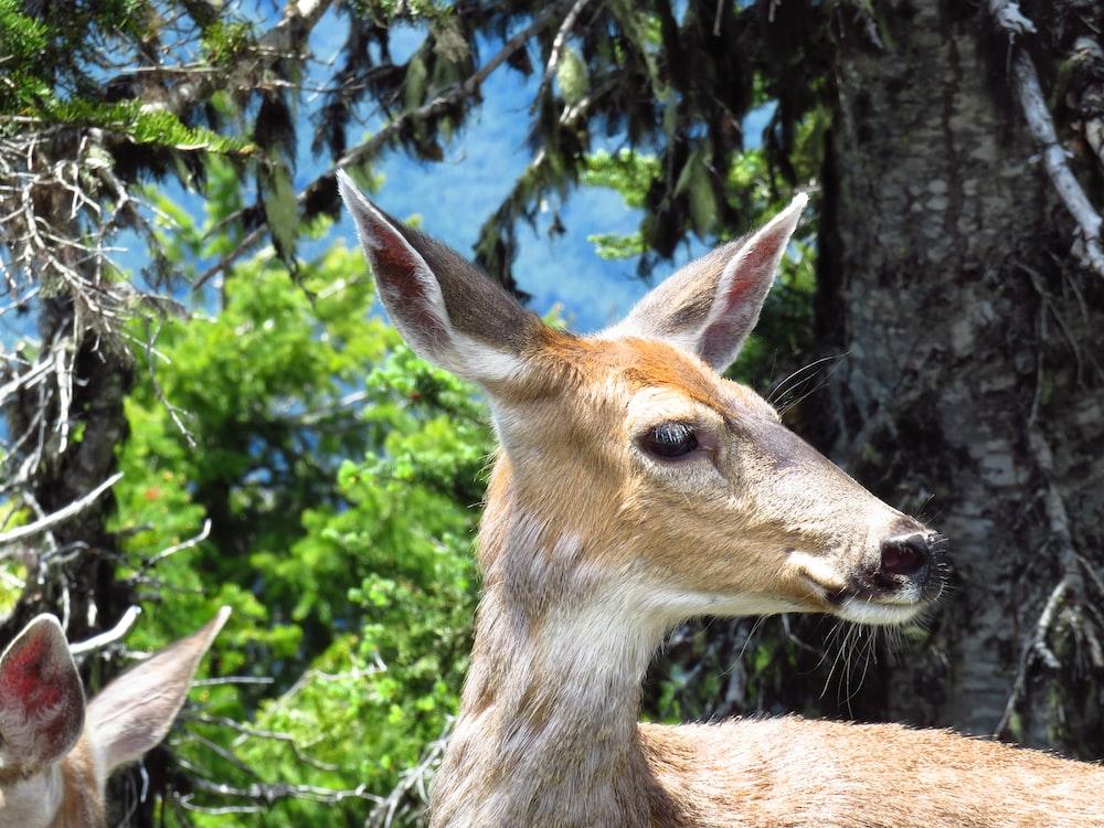brown deer standing near green tree during daytime