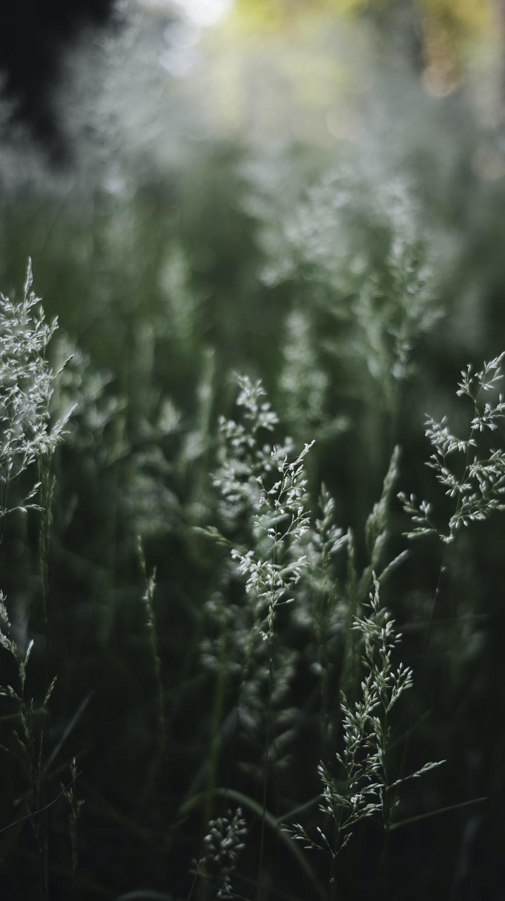 white flower buds in tilt shift lens