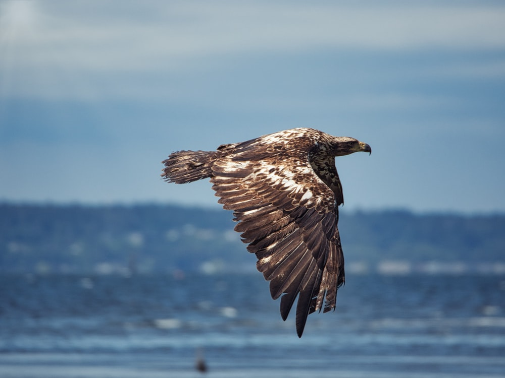 brown and white bird flying over the sea during daytime