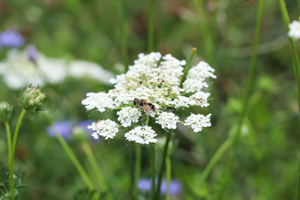white flower with bee on top