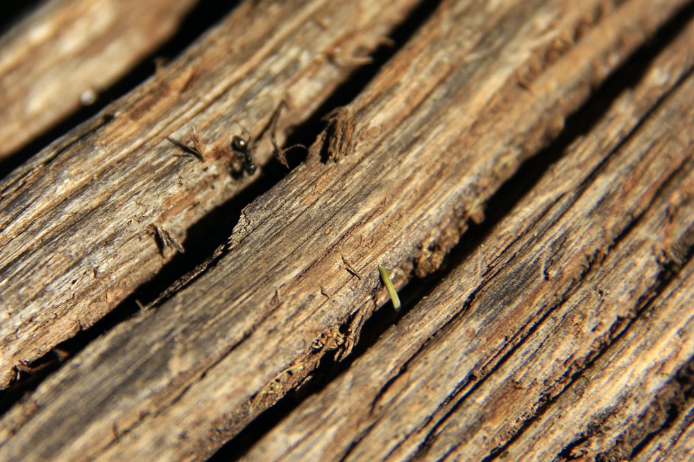 brown and black ant on brown wooden surface