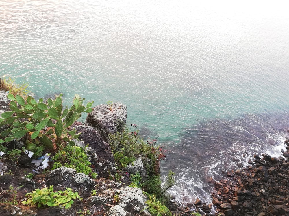 green plants on rocky shore during daytime