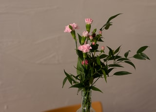 pink and white flowers in clear glass vase on brown wooden table