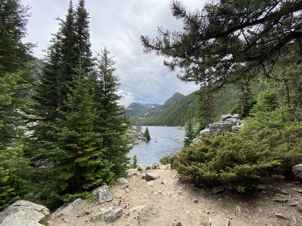 green trees near lake under white clouds during daytime