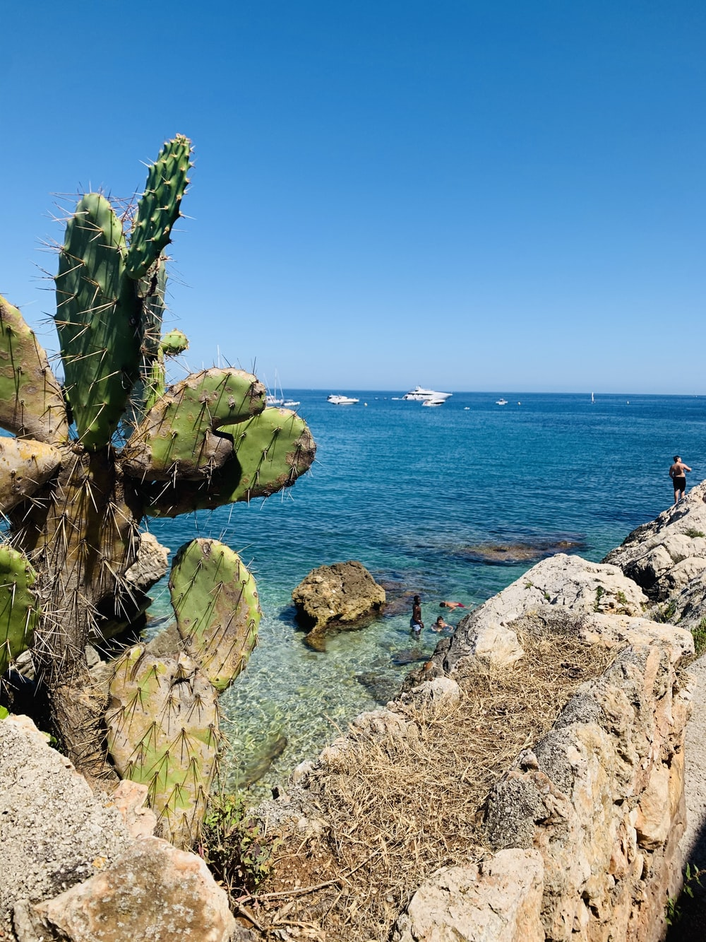 green cactus on rocky shore during daytime