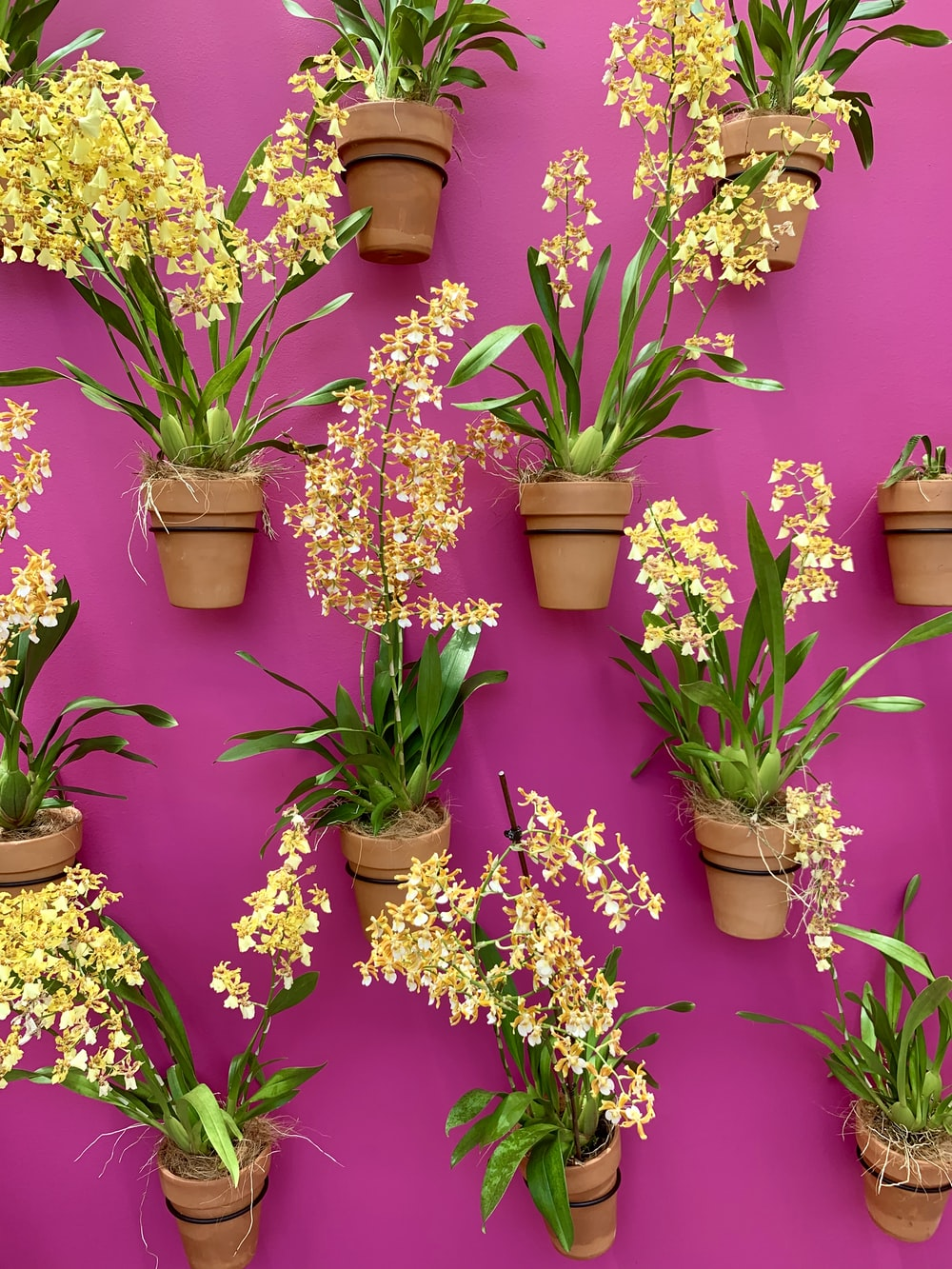 purple and yellow flowers in brown clay pots