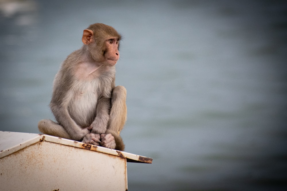 brown monkey sitting on brown wooden bar