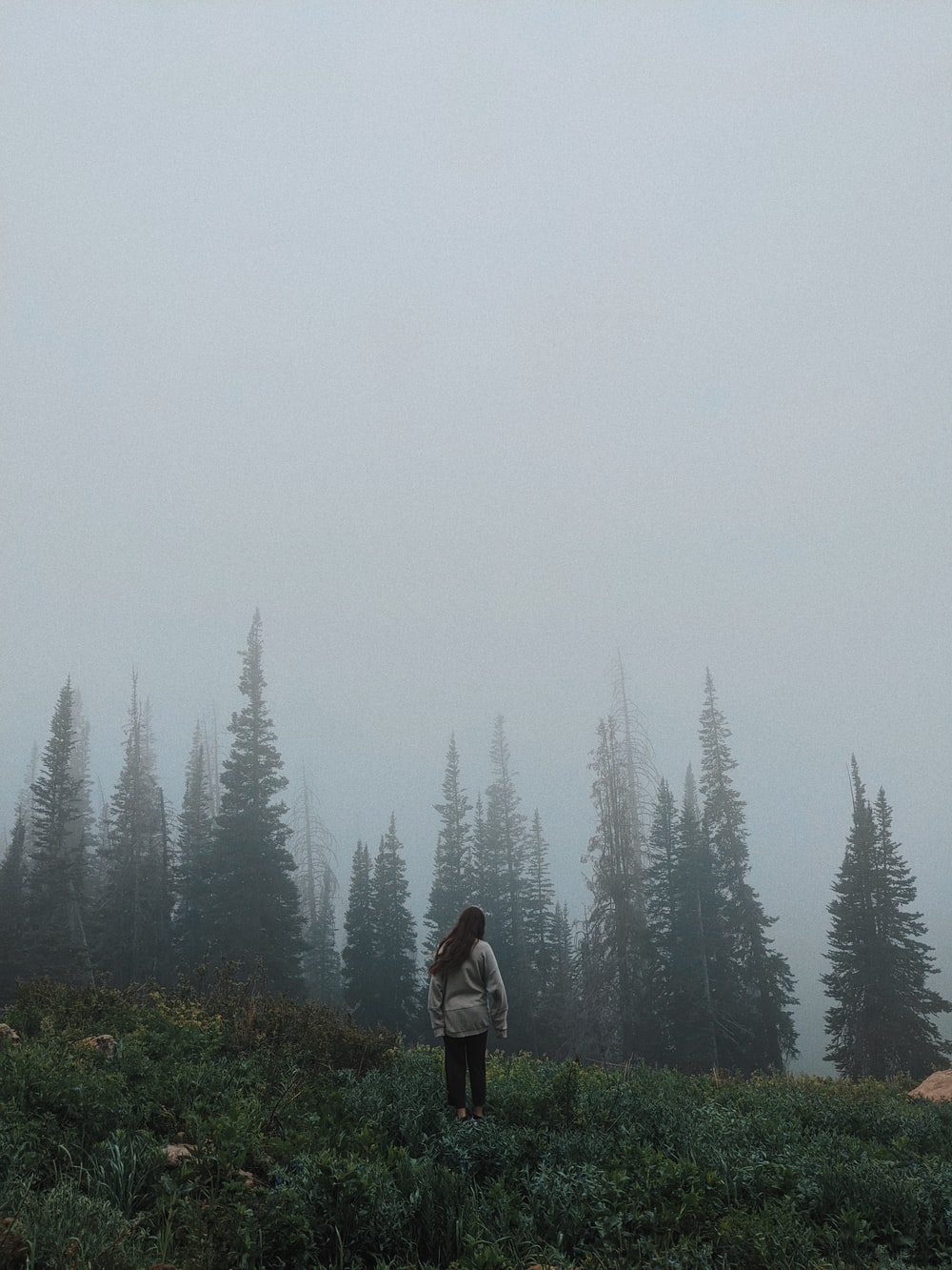 person in black jacket standing on green grass field near green pine trees during foggy weather