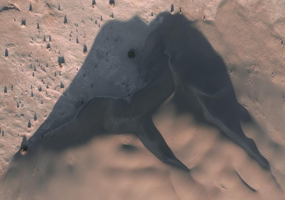 black animal on brown sand during daytime