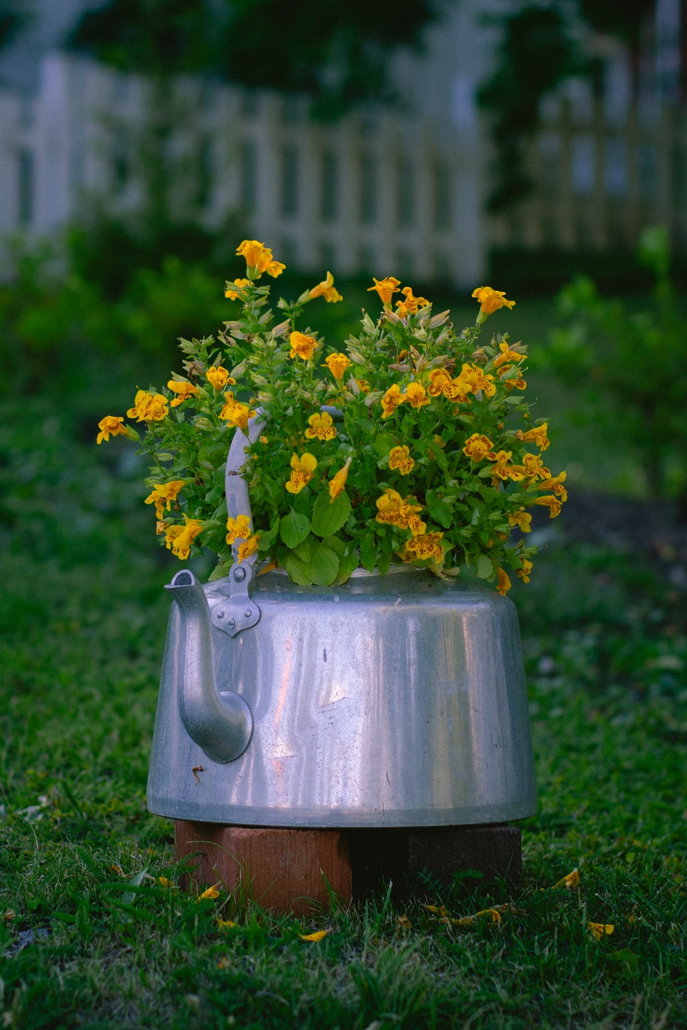 yellow flowers in gray vase on green grass field