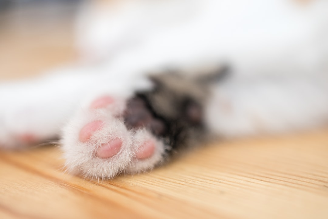 close-up of a sleeping cat's paw