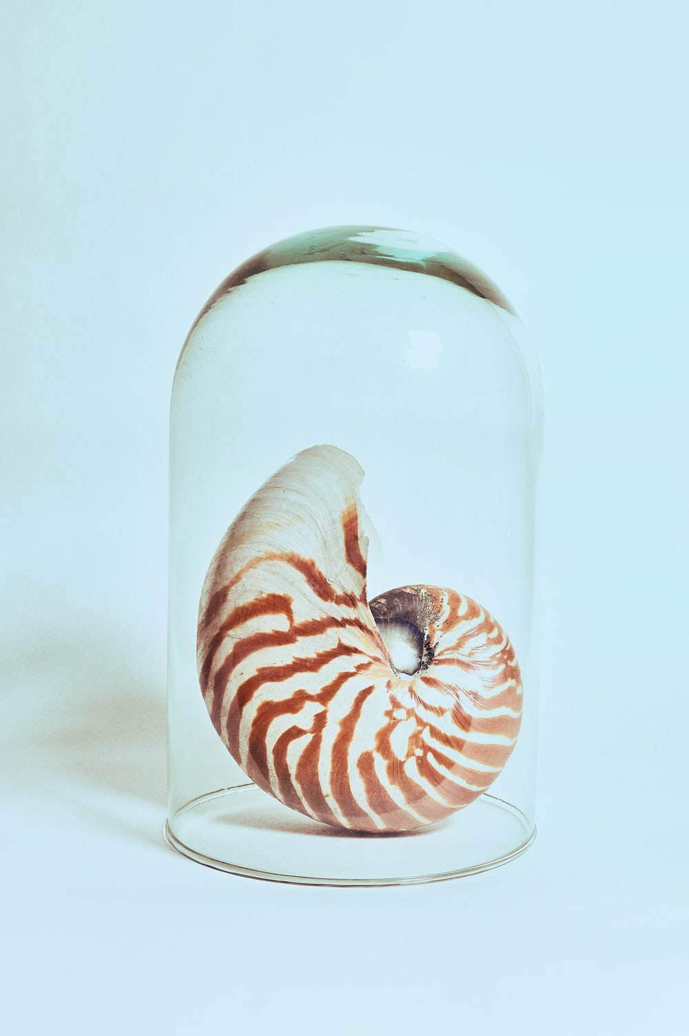 white and brown snail in clear glass bottle