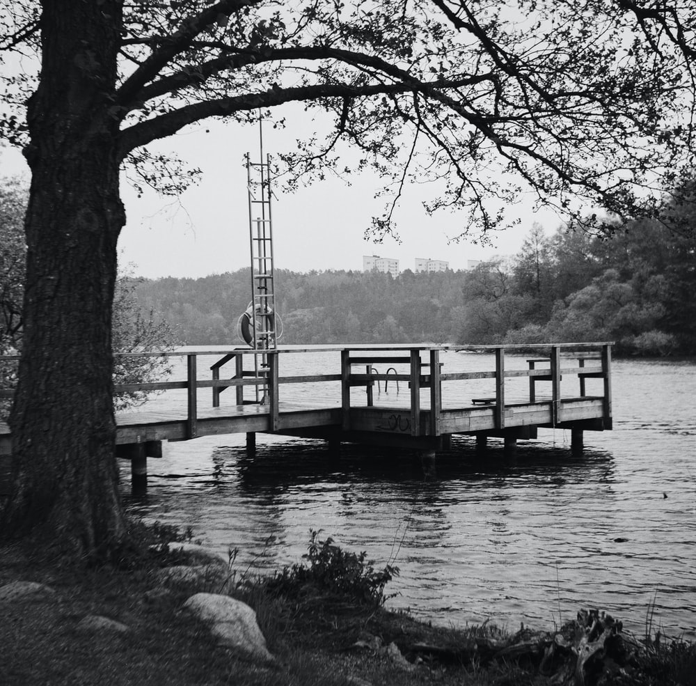 grayscale photo of wooden dock on river