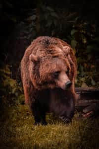 bear bear stories