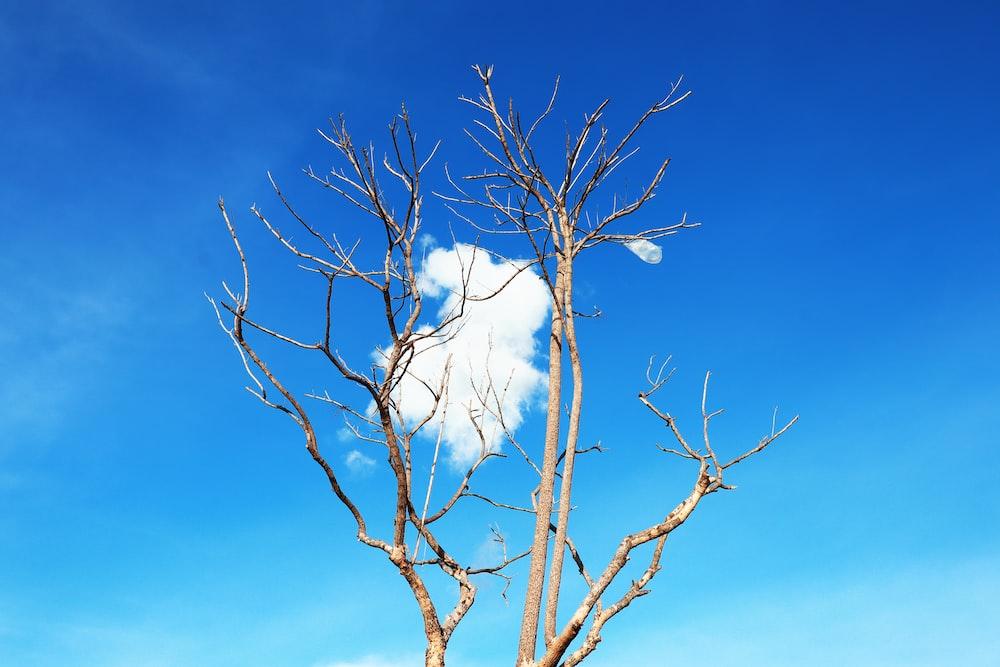 white bird flying over brown bare tree under blue sky during daytime