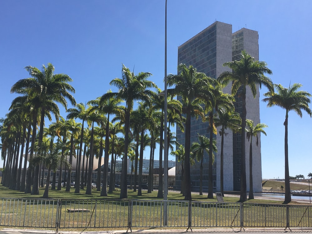 green palm trees near gray concrete building during daytime