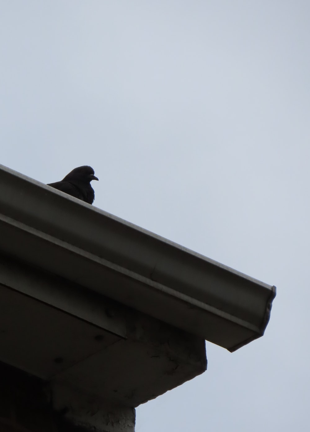 black bird on white concrete wall