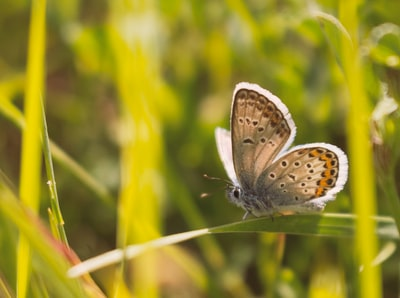 brown and white butterfly perched on green plant during daytime kosovo zoom background