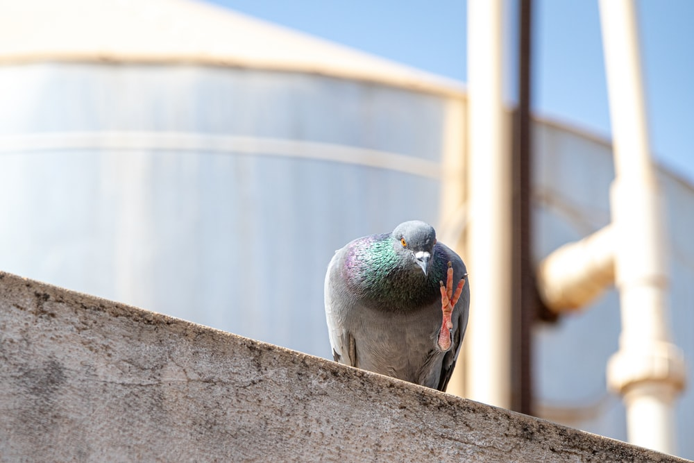 gray and green bird on gray concrete wall