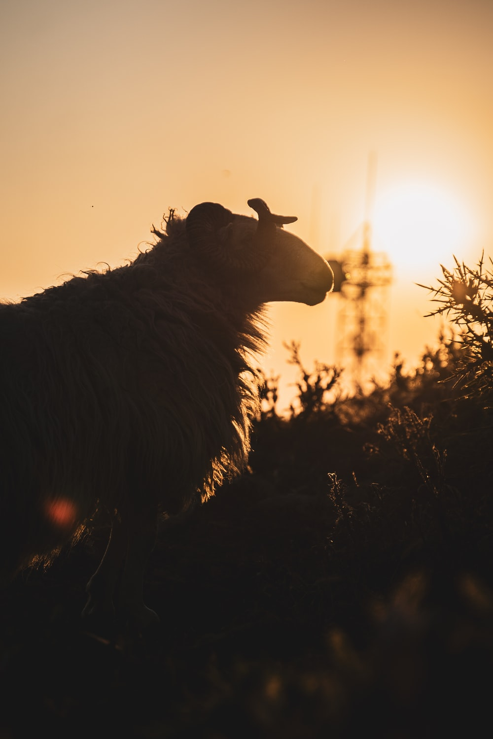 silhouette of a horse during sunset
