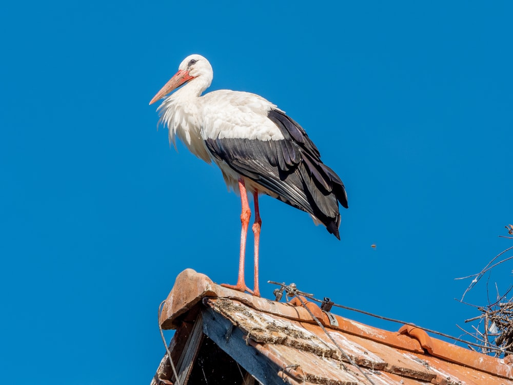 white stork perched on brown wooden post under blue sky during daytime