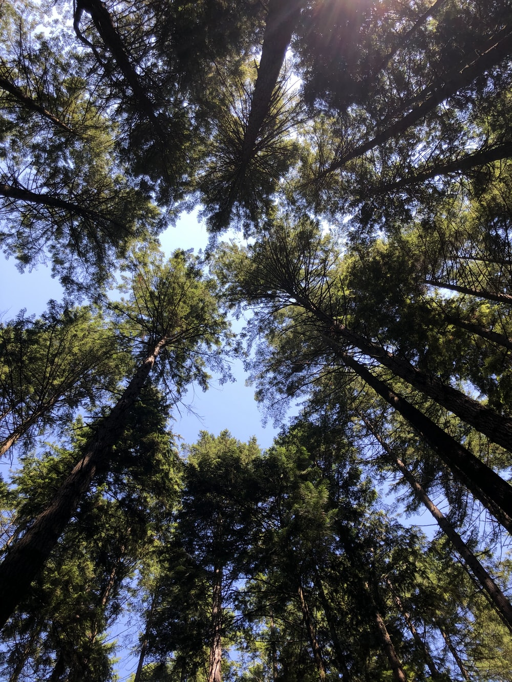 low angle photography of green trees under blue sky during daytime